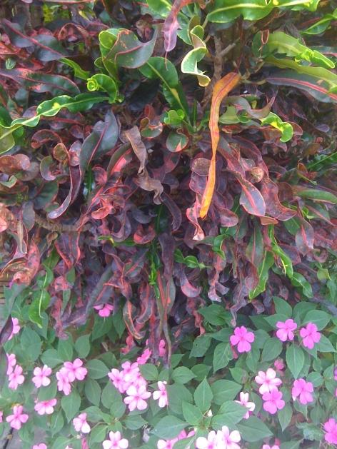 Plants in the garden