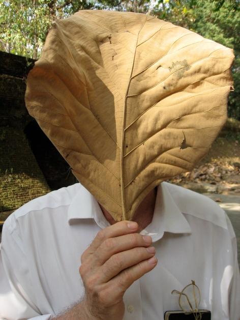 me:leaf copy