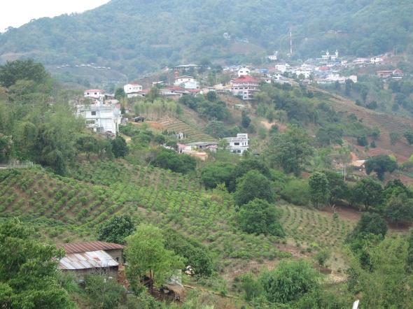 Mae Salong